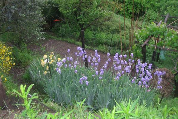 garden-07-600x400